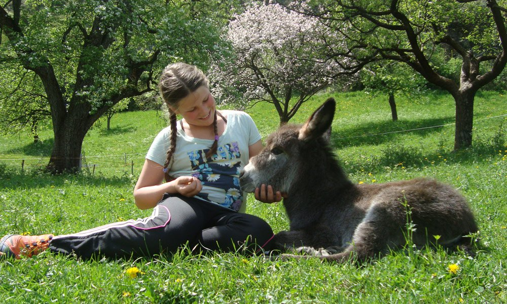 And our donkey to cuddle is so cute, isn't he?